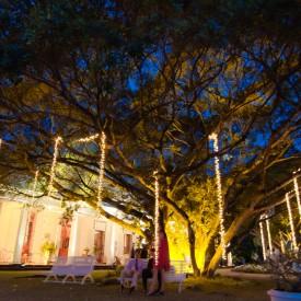 Eclairage d'arbres majestueux